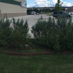 Lawn Maintenance Plans